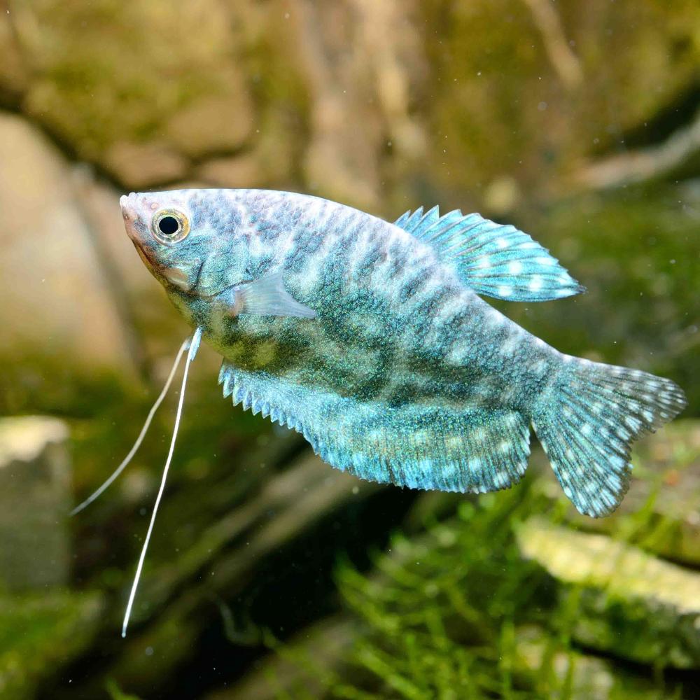 Pin By Wish Raquad On Fish Kingdom Pet Fish Aquarium Fish Fish Kingdom