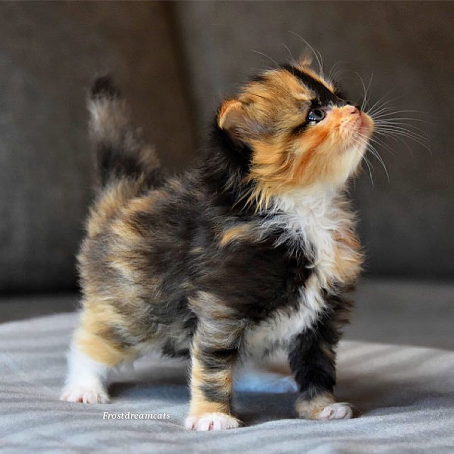 Pin By Casey 1819 On Animals I Love Kittens Cutest Cute Cats Cute Cats And Kittens