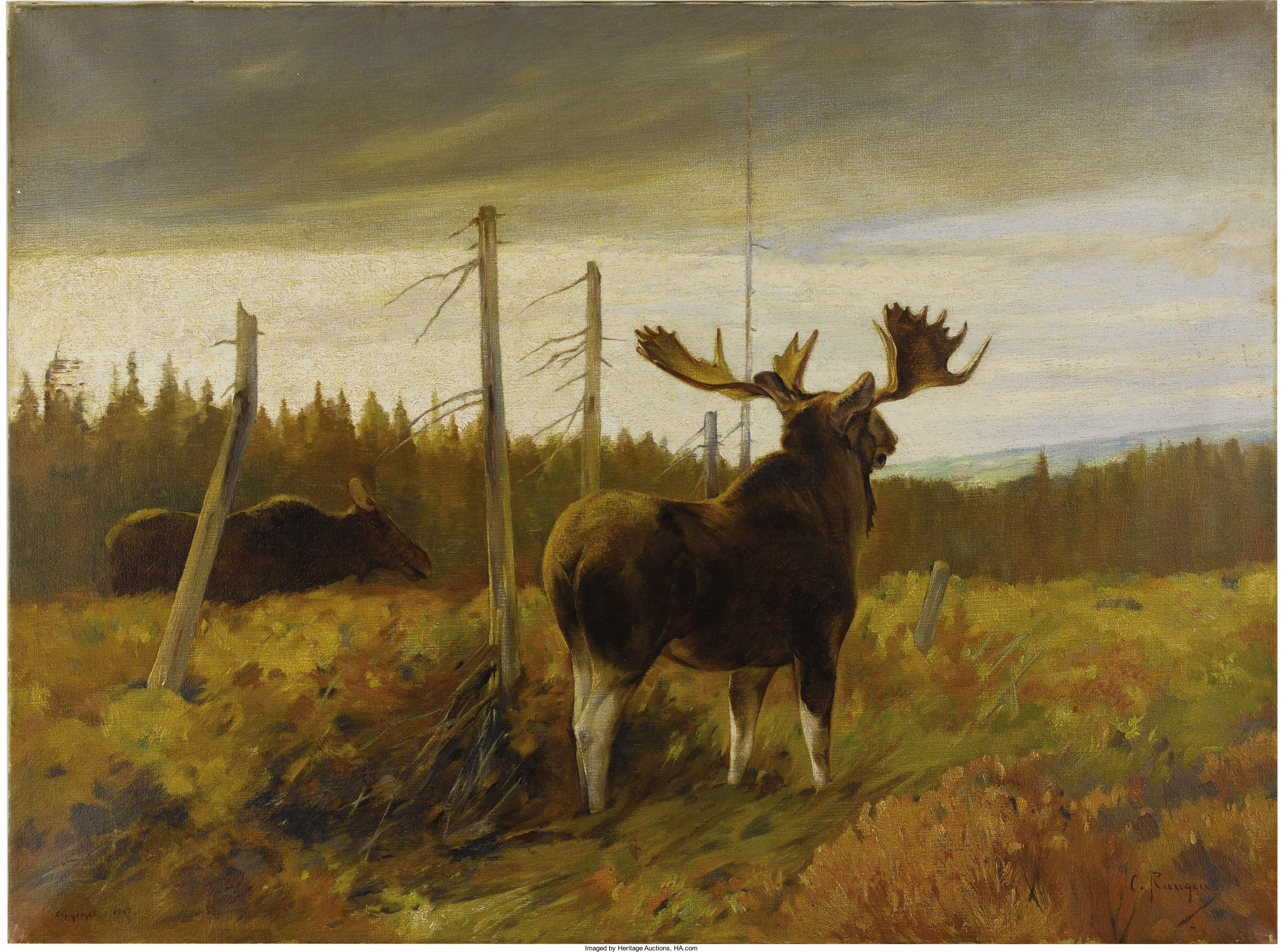 Carl Rungius American 1869-1959 . Moose In Clearing Signed And Lot #23169 Heritage
