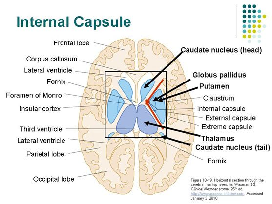 Cerebro izquierdo cápsula interna