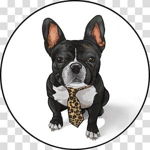 Boston Terrier French Bulldog Toy Bulldog Dog Breed Frenchie Transparent Background Png Clipart Dog Breeds Toy Bulldog Dogs