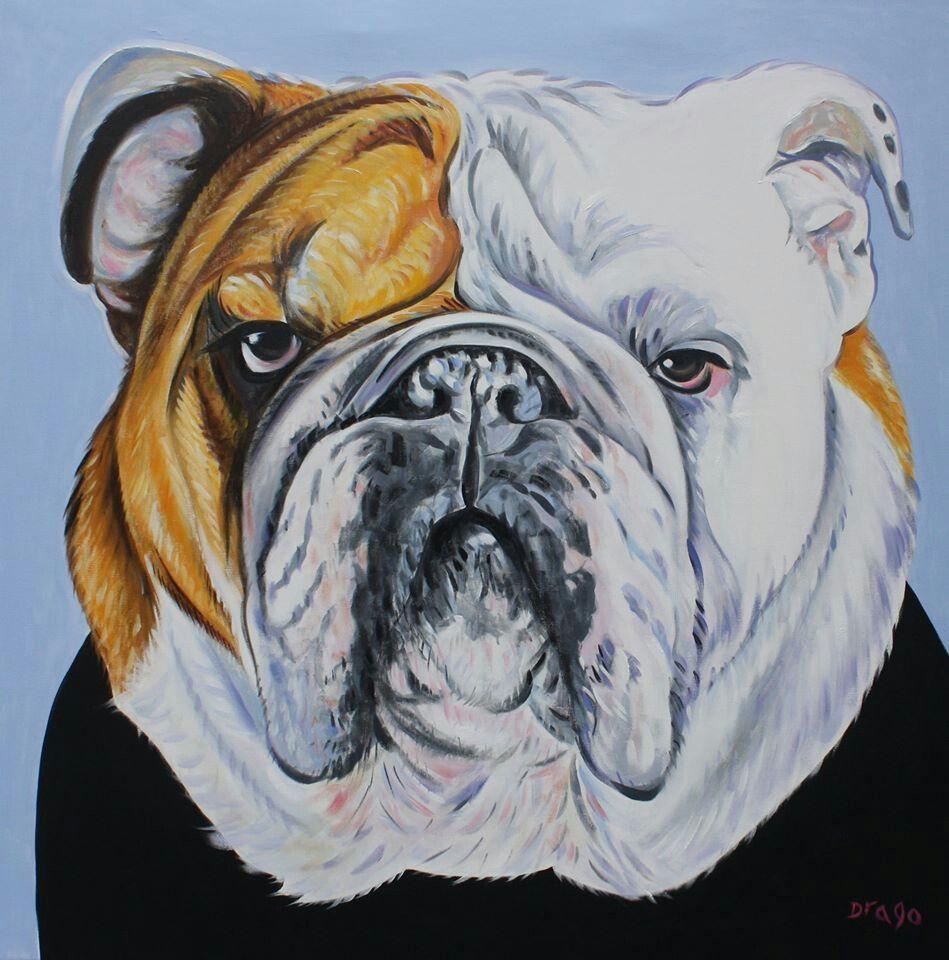 By drago milic bulldog art bulldog artwork animal art