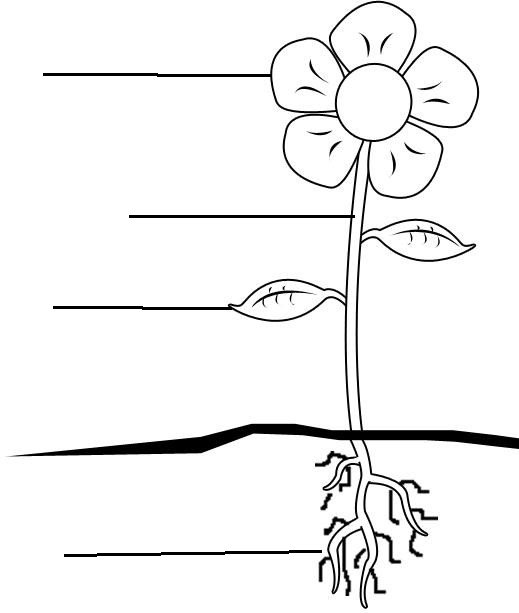 Used this as inspiration for our Parts of a Flower plantspng – Structure of a Flower Worksheet