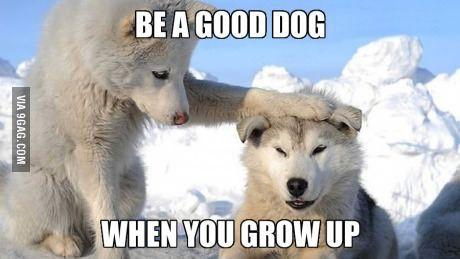 Be a good dog...