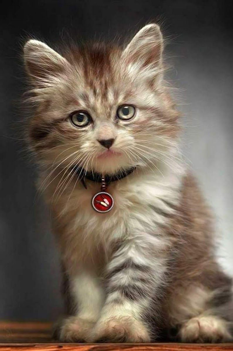 Pin By Gina Lawriw On Mostly Cats And Dogs Part Two Kittens Cutest Cute Cats Cute Animals