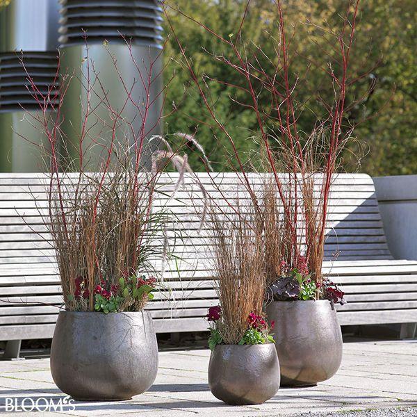 balkon und gartenideen stilvolle herbstpflanzungen als dreierensemble garten pinterest. Black Bedroom Furniture Sets. Home Design Ideas