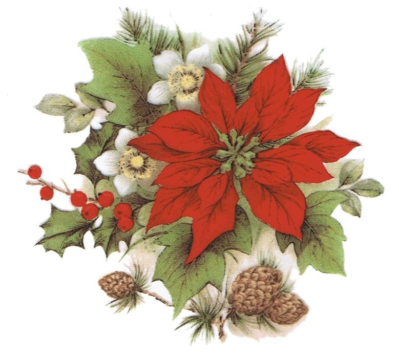 Poinsettia clip art holiday scrapbook cards