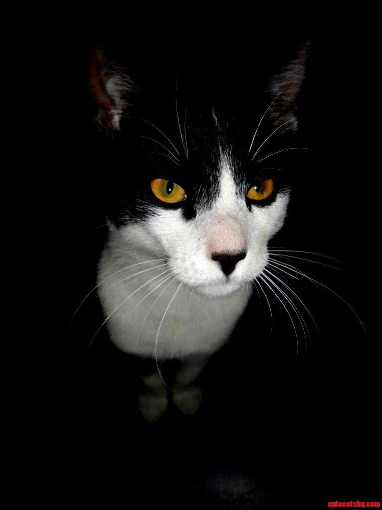 Montgomery bein all photogenic - http://cutecatshq.com/cats/montgomery-bein-all-photogenic/