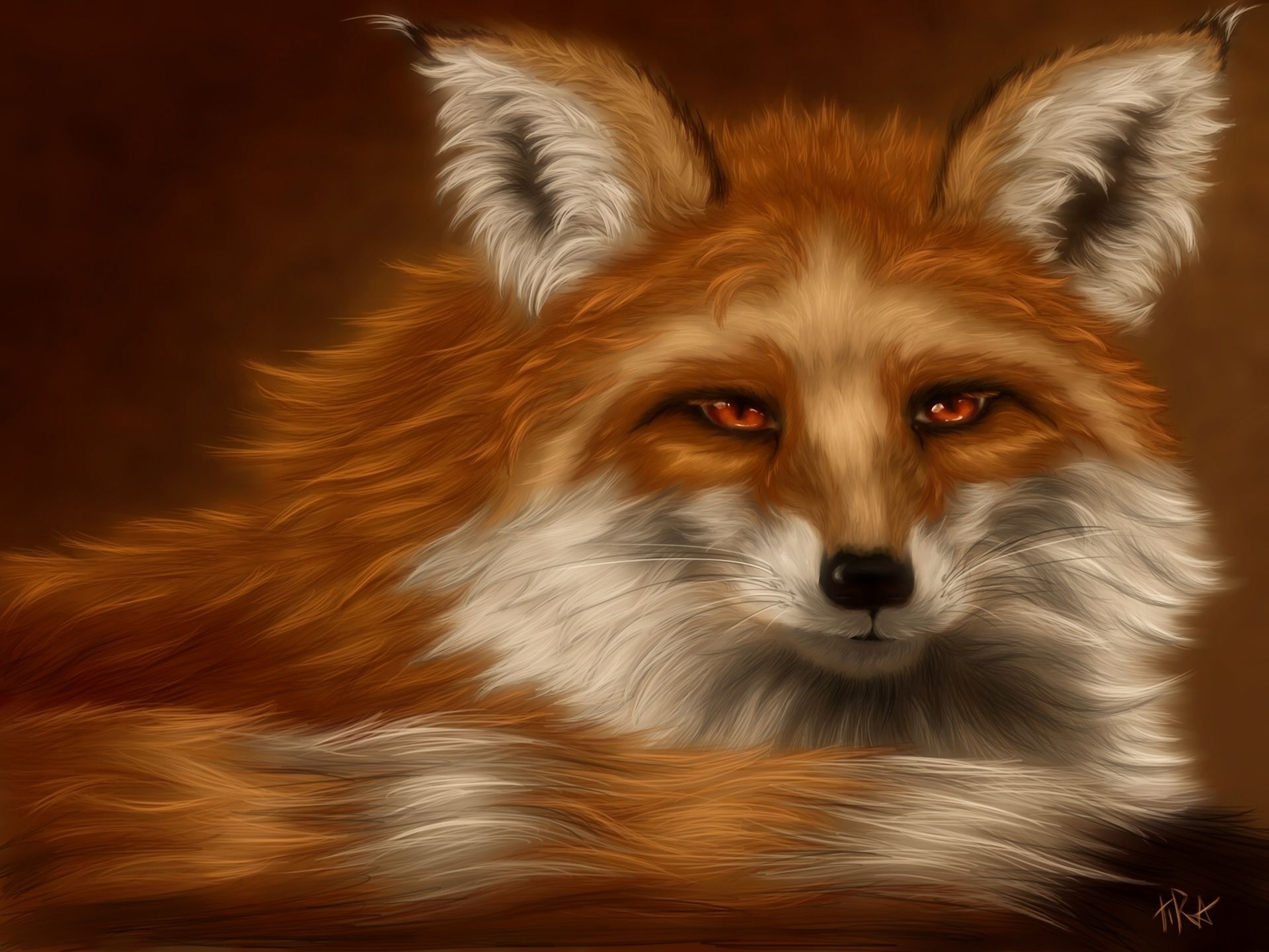 Download fuzzy fox animal wallpaper for download Animal