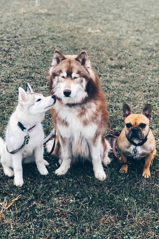 Unser Alltag Mit Hund 2 The Pawsome Tyroleans Fuchs Haustier Franzosische Hunderassen Susseste Haustiere