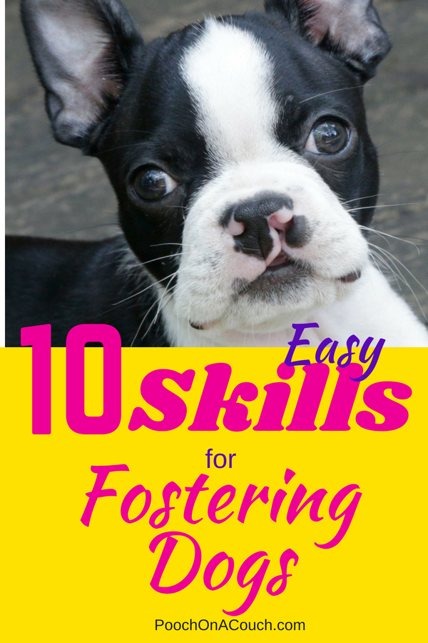 10 Easy Skills For Fostering Dogs Foster Dog Mom Foster Dog Foster Puppies
