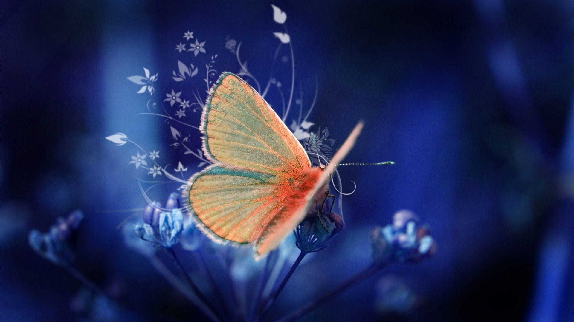 Hd wallpaper cave - Butterfly Wallpapers Hd Wallpaper Cave