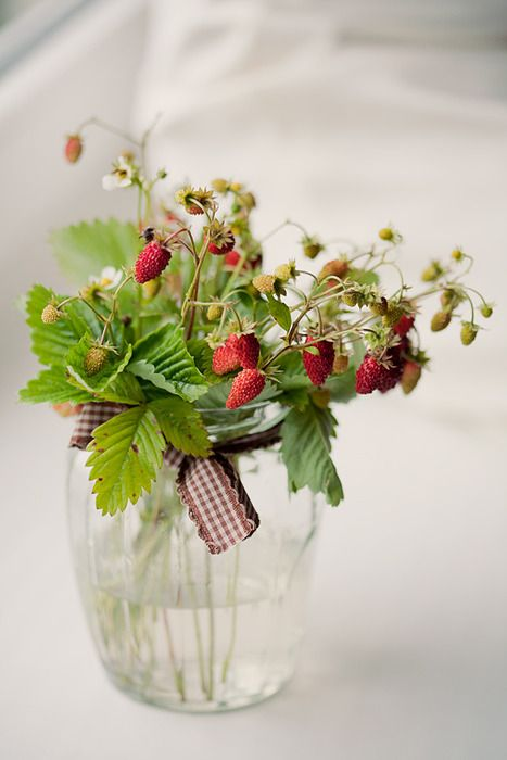 Strawberry plant, I would love to have this in my kitchen!