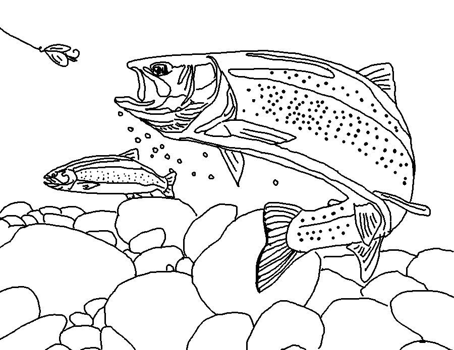 Rainbow Trout Landscape Fish Coloring Page Animal Coloring