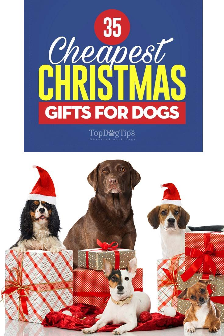 34 cheap but cool christmas gifts for dogs dog christmas