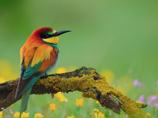 National Geographic Birds Birds Wallpaper Hd Beautiful Birds Beautiful Bird Wallpaper