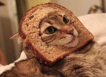 Cat In Bread Box Inspiration Hahahahahah  Funnyyyy  Pinterest  Cat Animal And Hilarious Design Inspiration