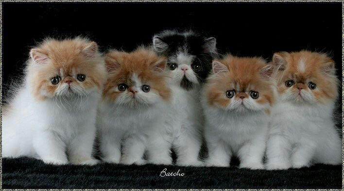 Pin by Marilyn Murphy on ANIMALSCATS FAVORITES Cute