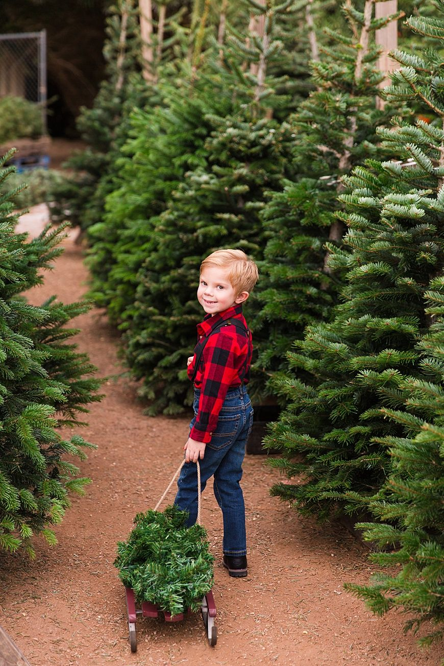 Gilman Family Leah Hope Photography In 2020 Hope Photography Christmas Tree Lots Holiday Photos