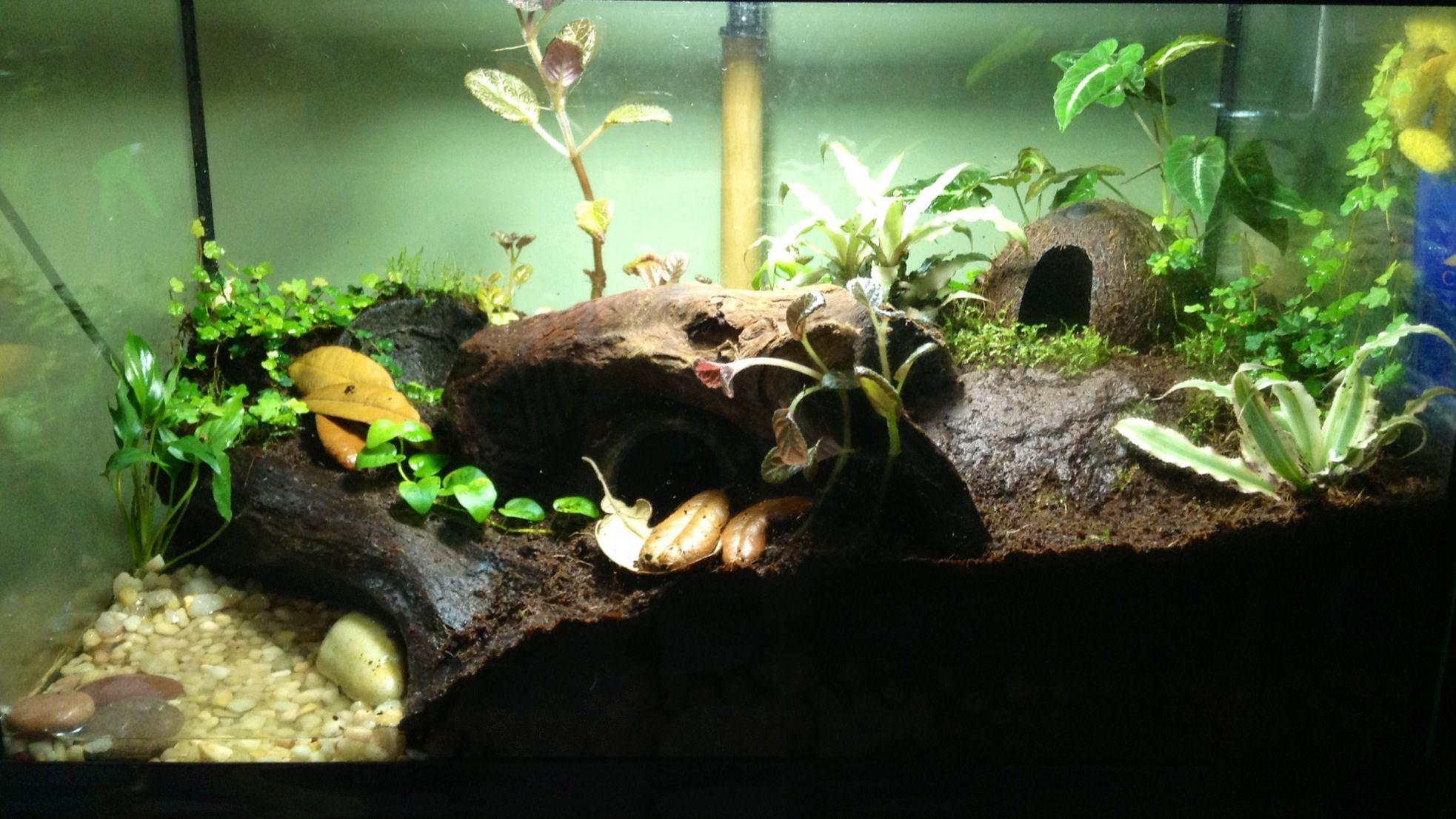 10 gallon dart frog vivarium | Tanks and vivariums ... 10 Gallon Dart Frog Vivarium