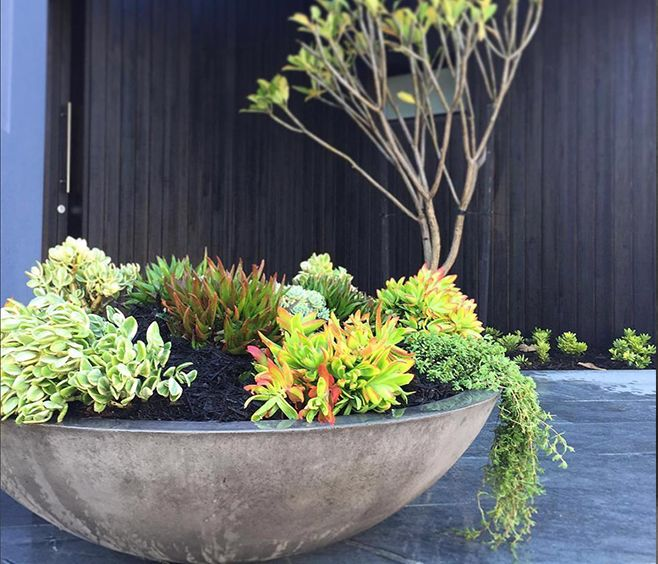 The Litestone Zen Planter Bowl Is A Single Walled Designer Bowl With A Low Profile Particularly Suited To Su Zen Planter Large Garden Pots Front Garden Design