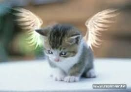 Melek Resimleri Ile Ilgili Gorsel Sonucu Yavru Kediler Kedi