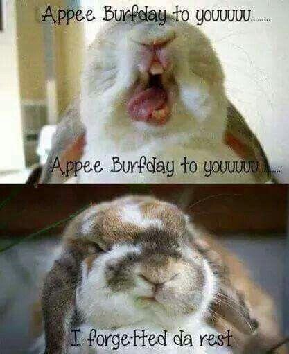 Appy Birthday Bunny Funny Rabbit Cute Bunny Pictures Happy Birthday Bunny
