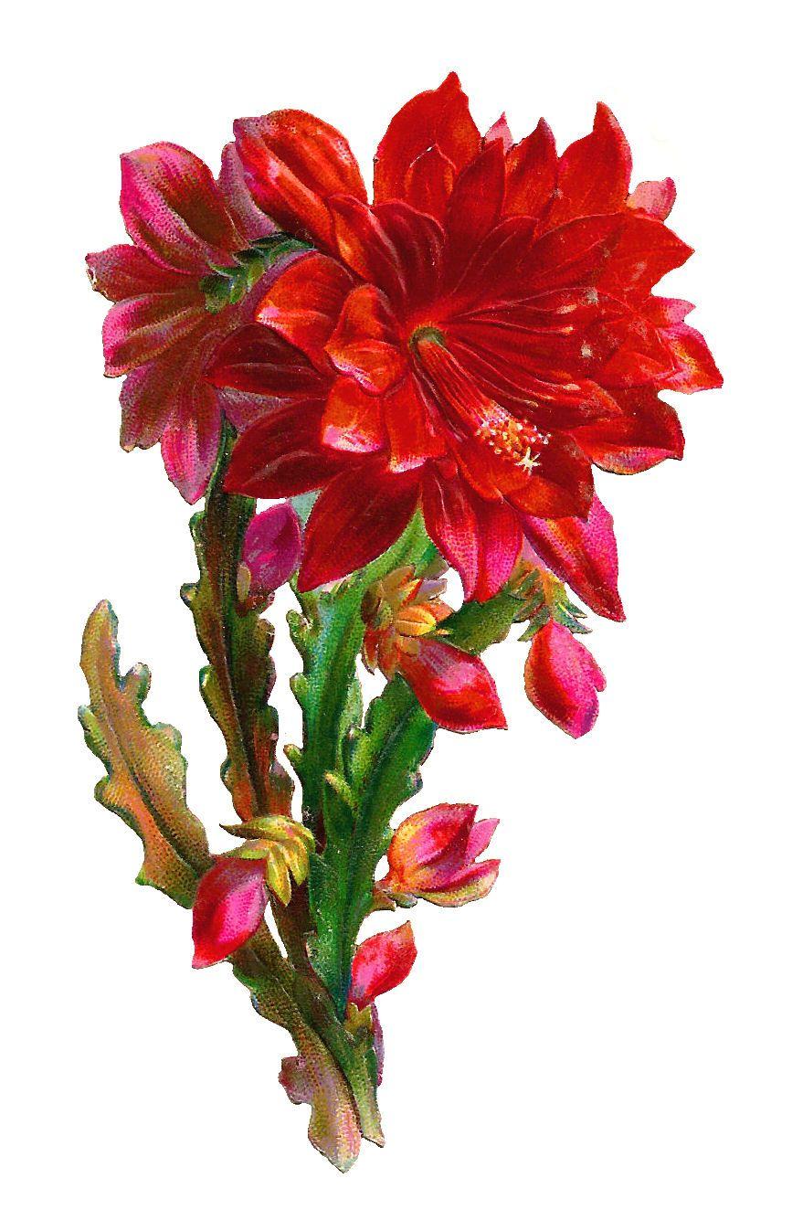 Httpclipartbestclipartsrcdpaqrcdpaq7c9eg httpclipartbestclipartsrcdpaqrcdpaq7c9eg colorful flowers pinterest colorful flowers izmirmasajfo