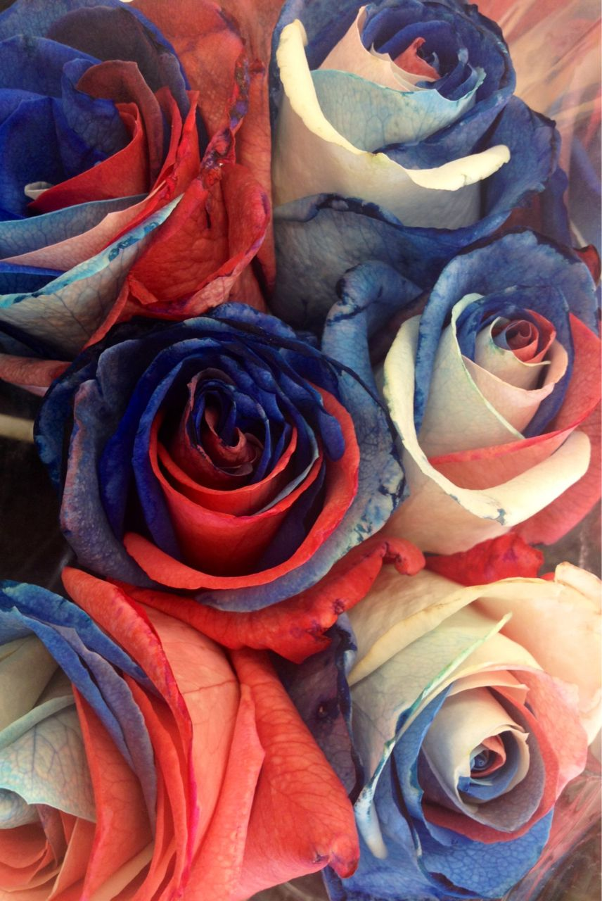 Red, white, and blue roses. Made by taking a white rose, splitting ...