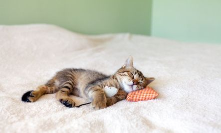 5 Surprising Foods For Better Sleep And 4 To Avoid Cats Cute Animals Kittens