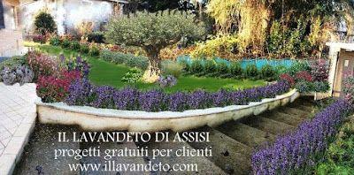 Progetti giardini privati, progetti balconi e terrazzi. Foto di aiuole e picc...