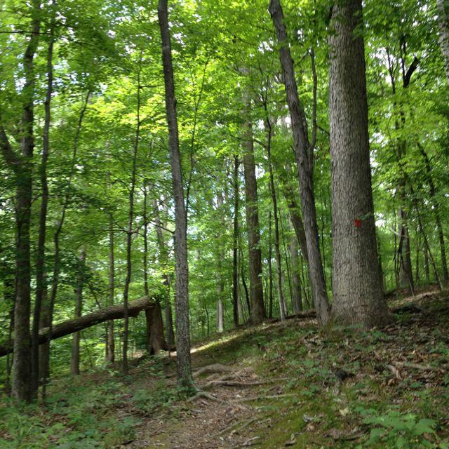 Warriors Path State Park Pennsylvania: Hiking Through Babler State Park