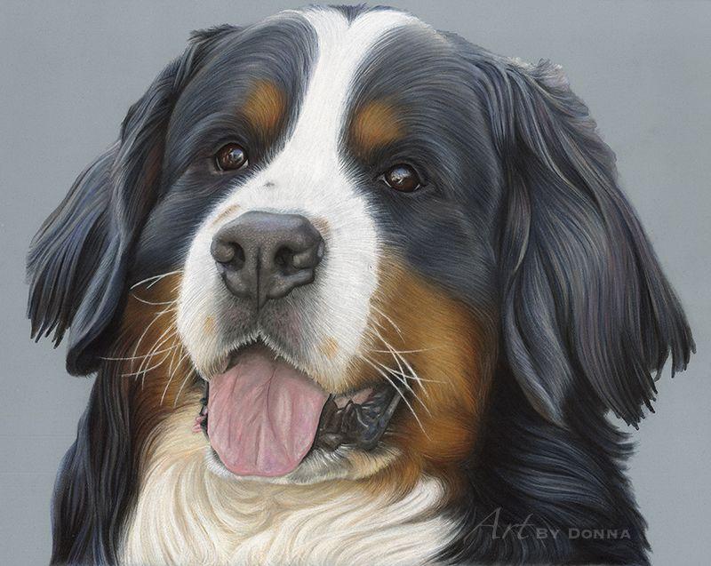 Bernese Mountain Dog Jasper Www Bydonna Co Uk Www Facebook Com Bydonna Co Uk Dog Art Bernese Mountain Dog Animal Portraits Drawing