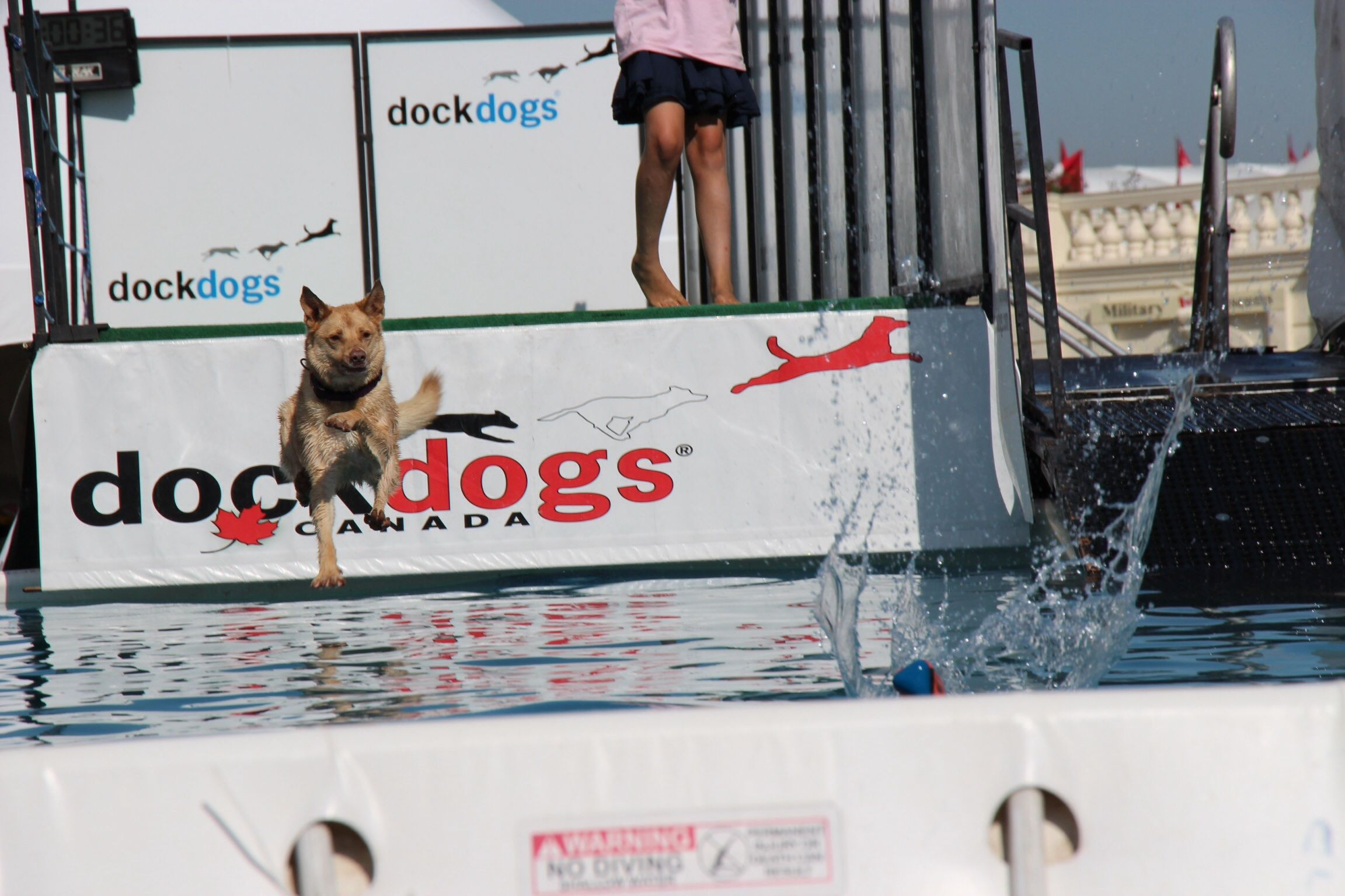 Spruce Meadows July 2014 Dock Dogs Dogs Pictures Spruce