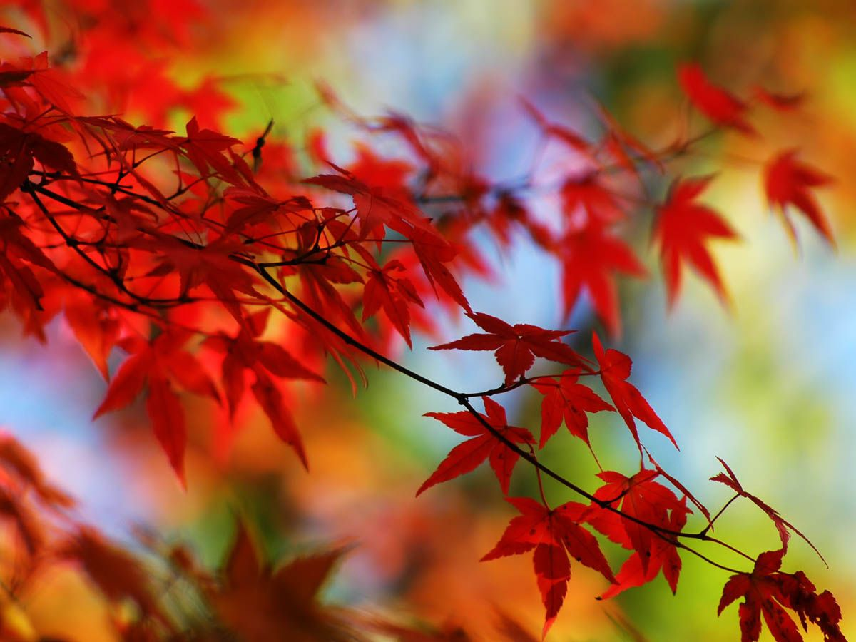 Red in Japan