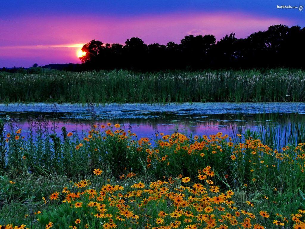 Blomst landskap - mobiltelefon bakgrunnsbilde: http://wallpapic-no.com/landskap/blomst-landskap/wallpaper-10866