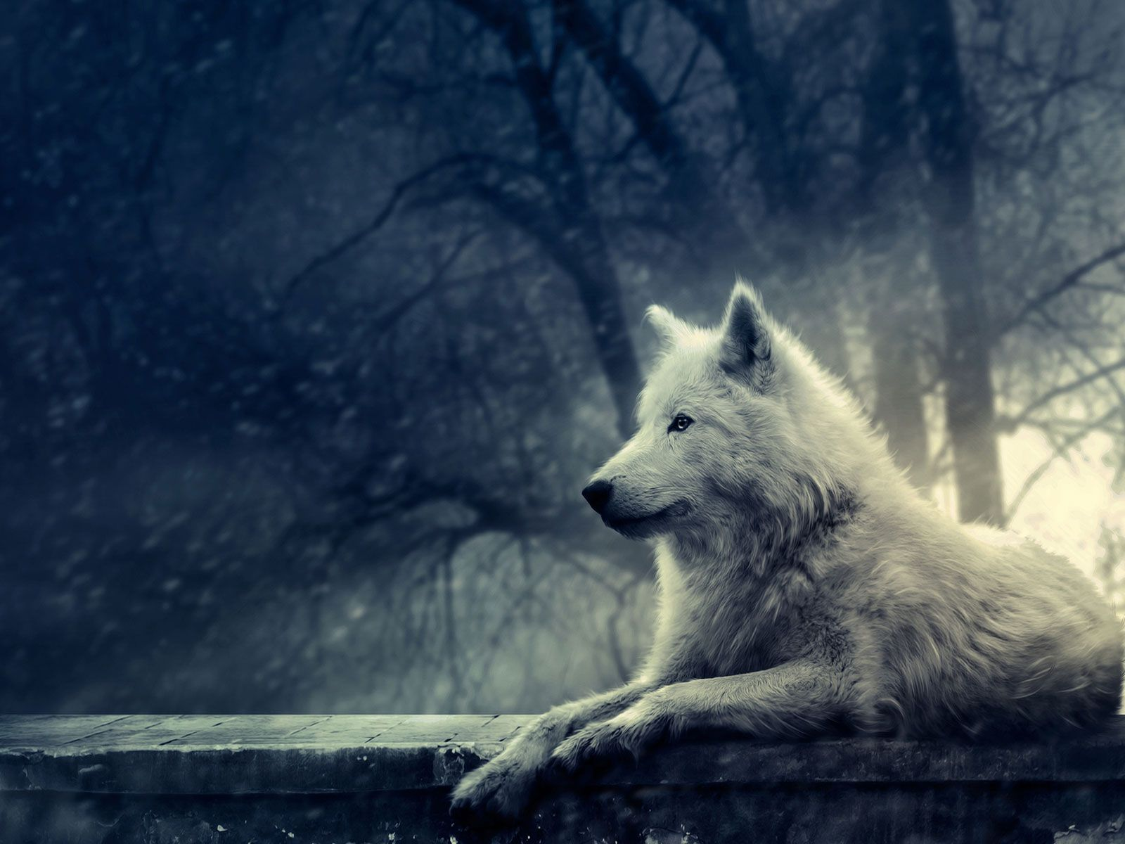 wolves wolf background http www 0wallpapers com 1763 wolves
