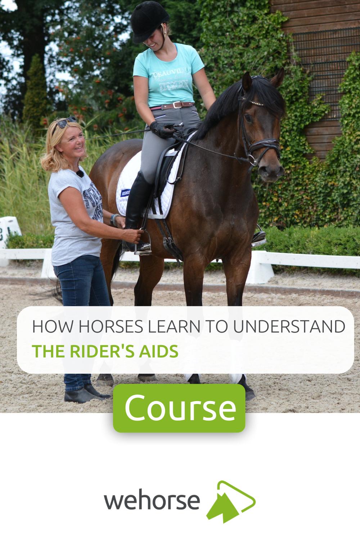 Pin Auf Horse Rider S Tips