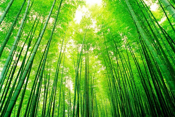 Bamboo Forests Of Anji China Scenes From Crouching Tiger Hidden