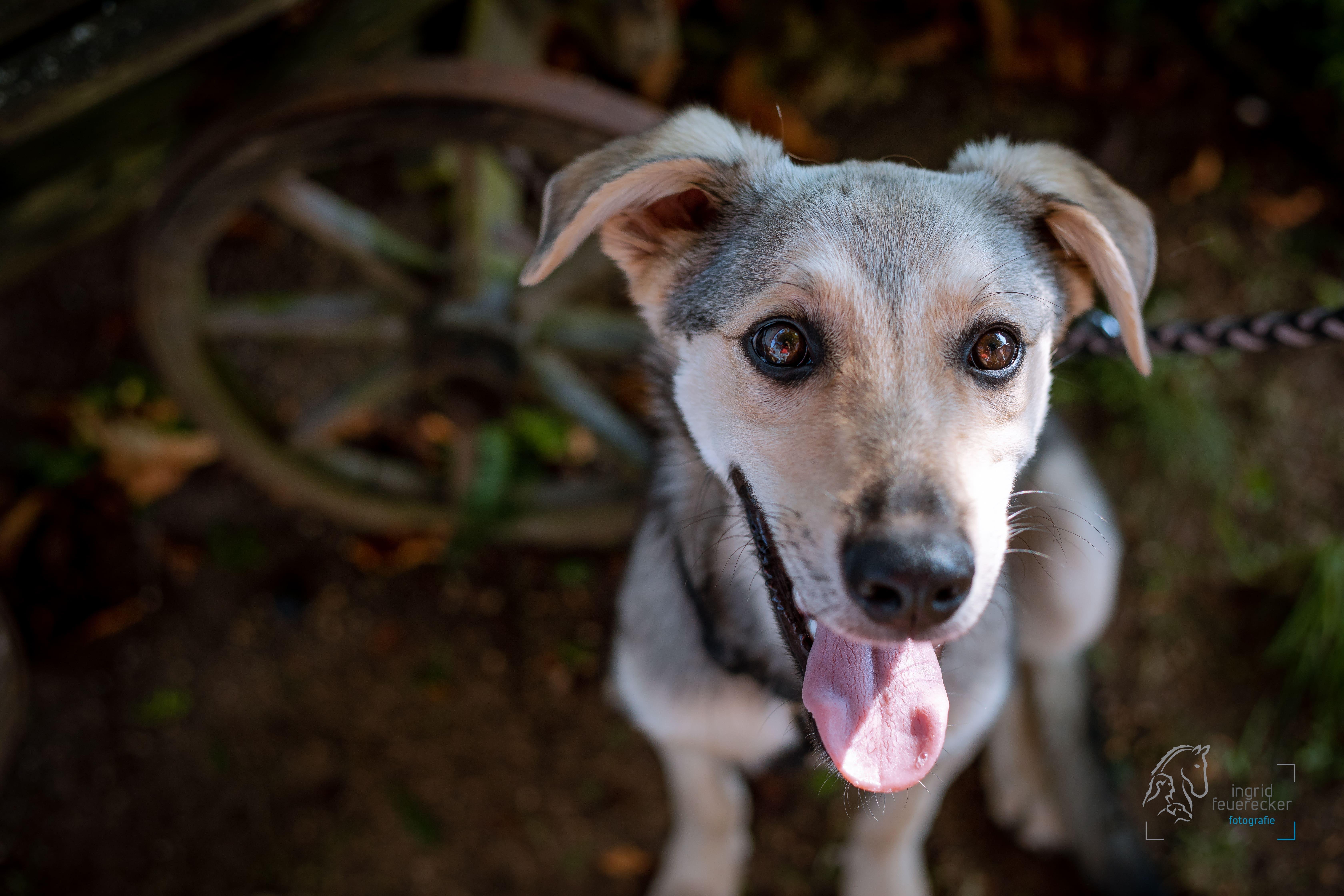 Hundefotografie ehrenamtlich für den Tierschutz. Ingrid