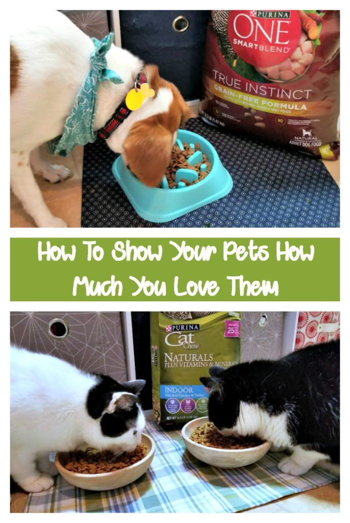 How To Show Your Pets How Much You Love Them Pets, Your