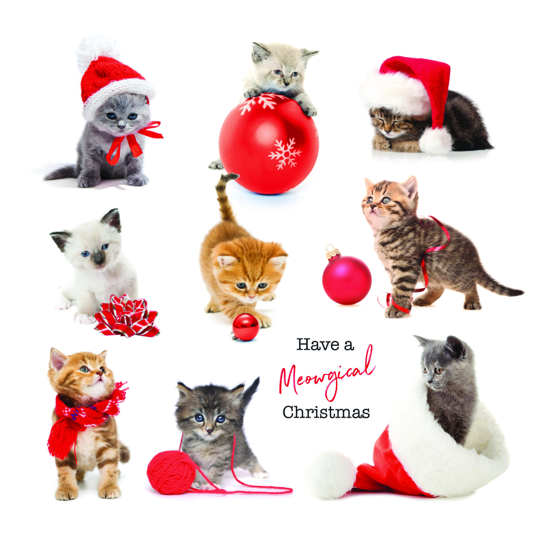 Kittens Charity Christmas Card Contemporary christmas