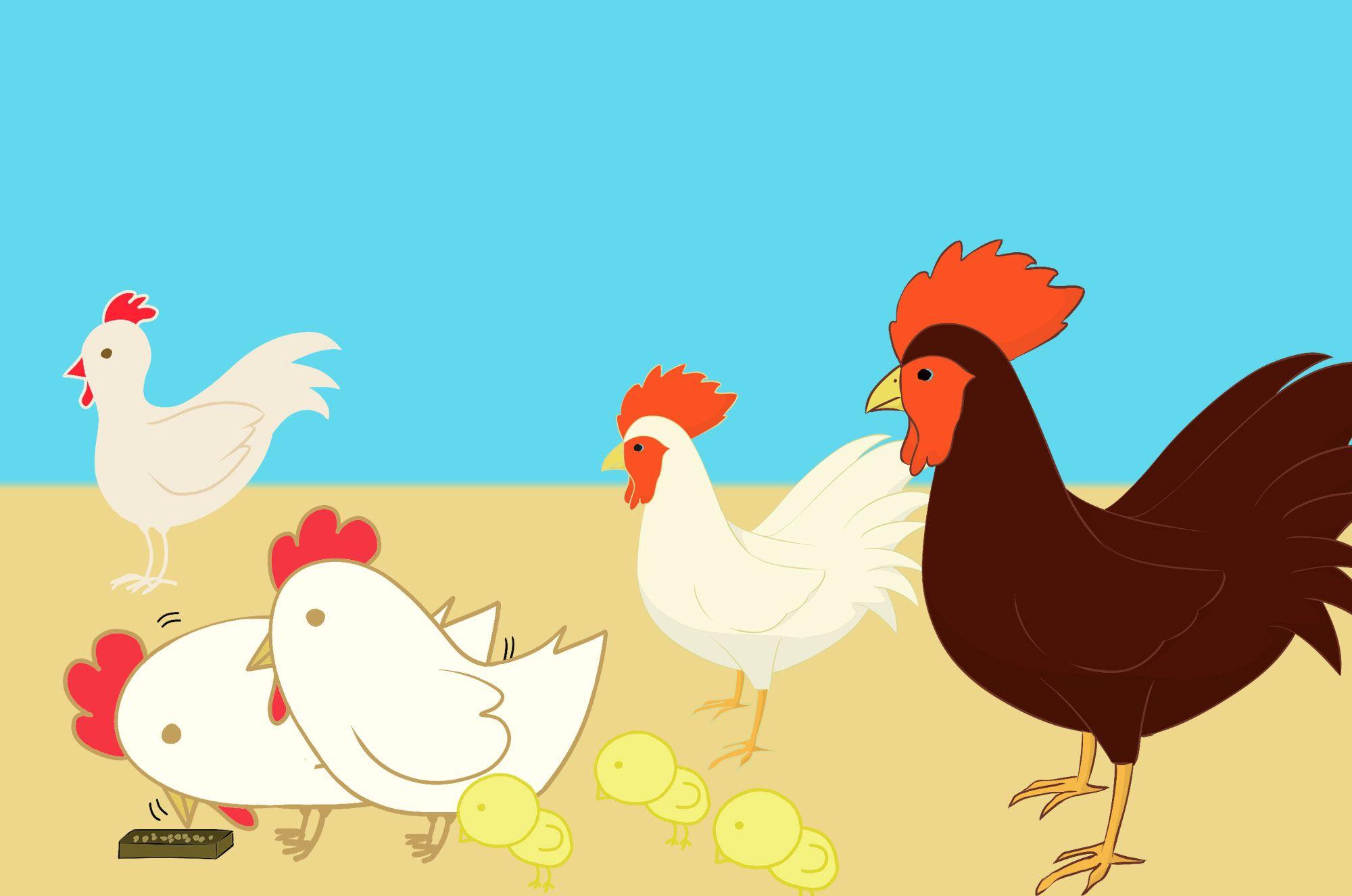 にわとりイラスト:可愛い鳥素材集!にわとりがいっぱい!茶色、白