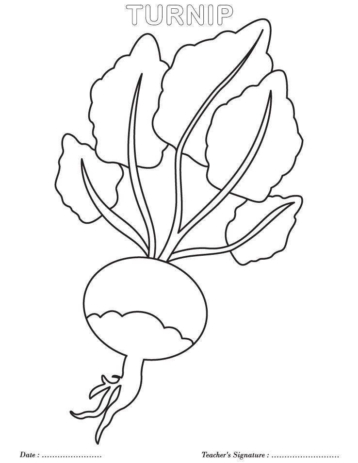 Turnip coloring page giant turnip classroom ideas for Turnip coloring page
