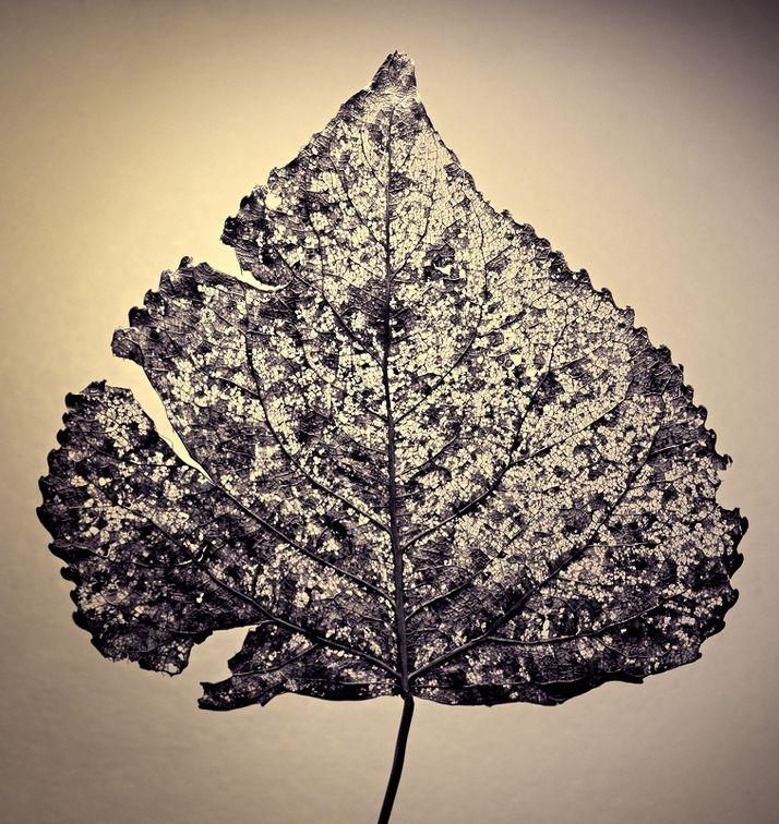 23: Leaf - Kevin