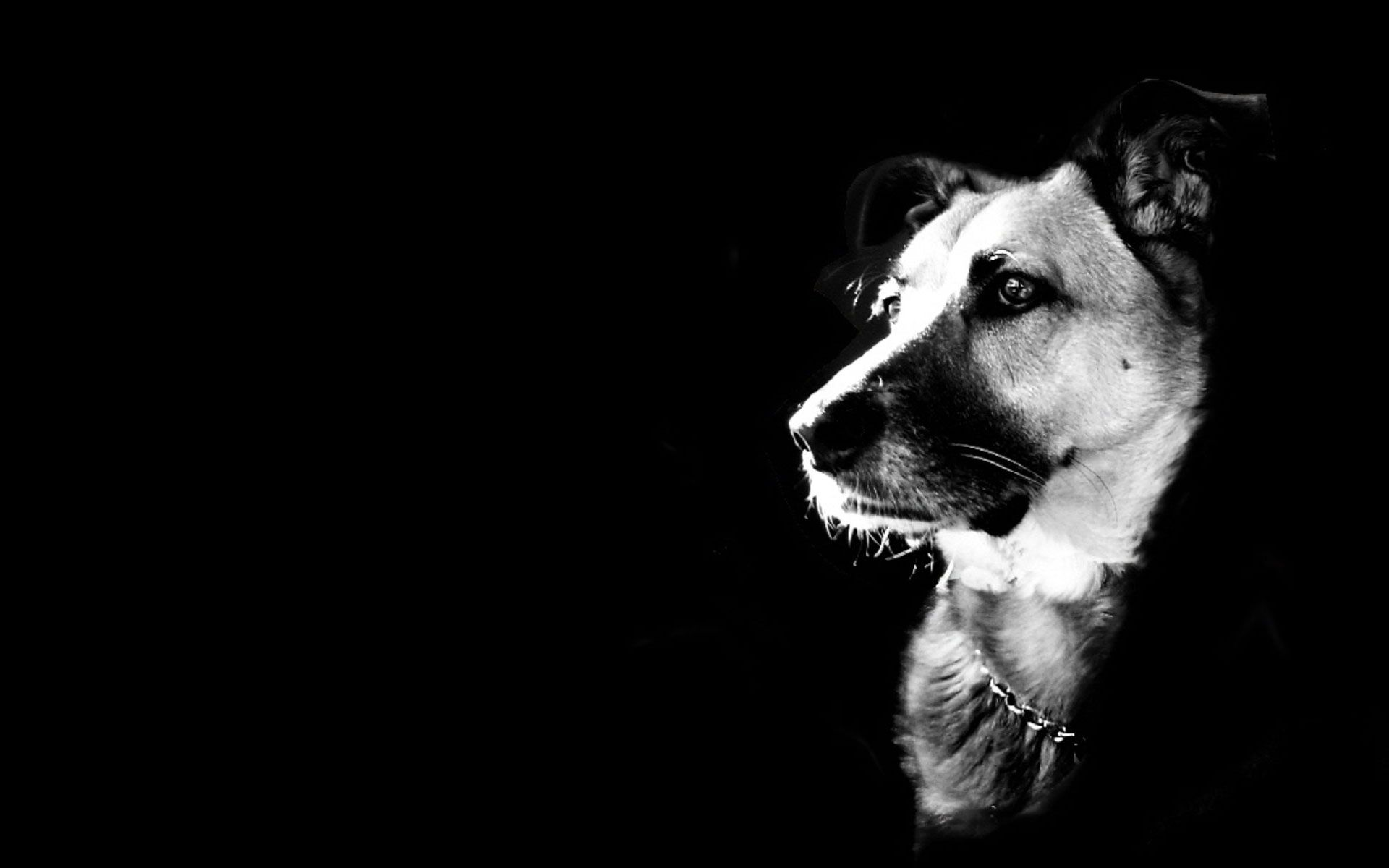 wallpaper 10595 1920x1200 px | wallpaper | pinterest | dog and animal