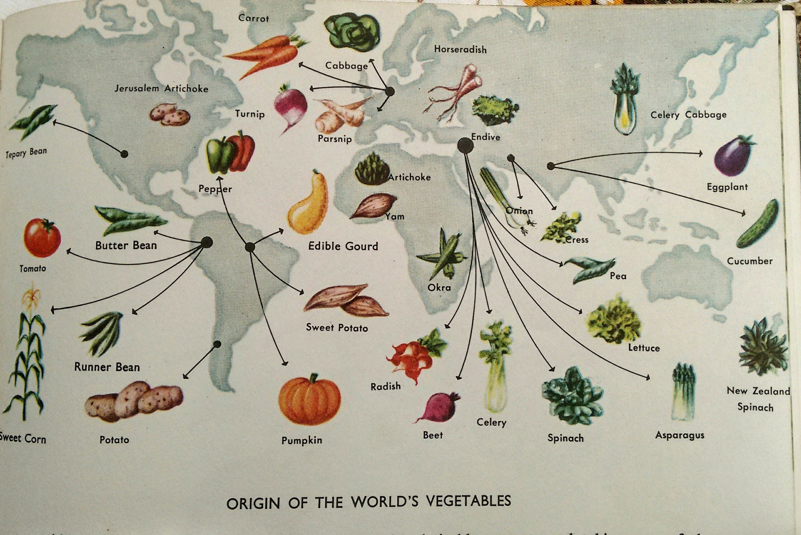 The Origin of the World's Vegetables 🥕 The Golden Treasury