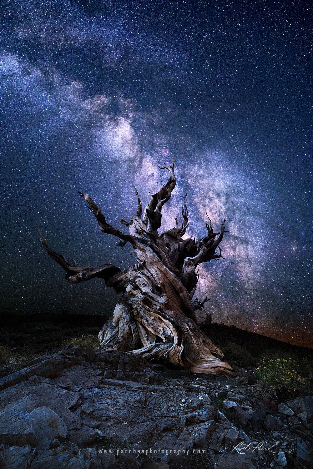 Milky Way And Ancient Bristlecone Pine Forest California