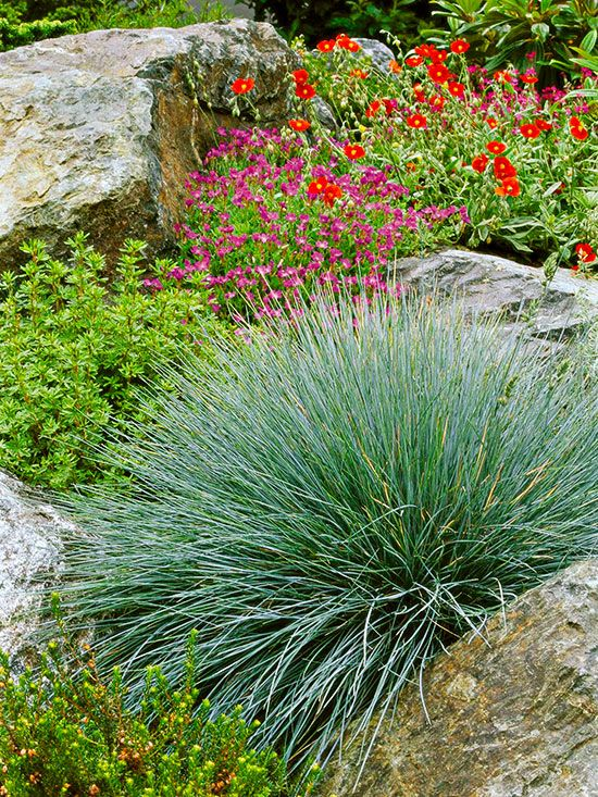 23 Varieties Of Ornamental Grasses We Re Obsessed With Grasses Landscaping Grasses Garden Blue Fescue