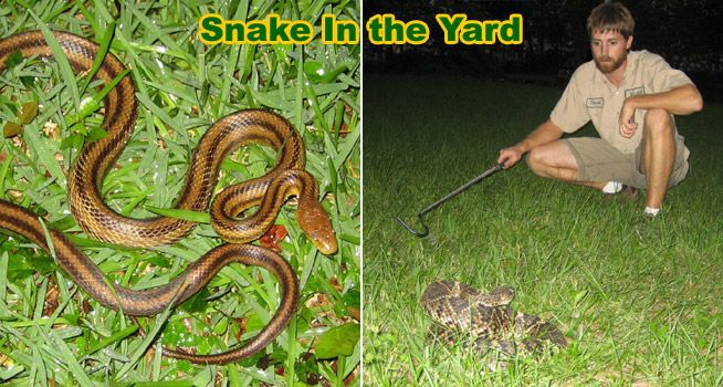 How to Keep Snakes Out of Your Yard | Snake, Snake ...